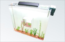Aquariums and fish tanks.